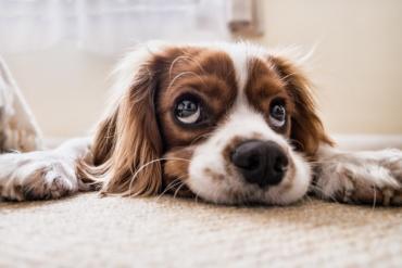 dog-2785074_1280