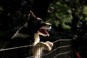dog-2848295_1280