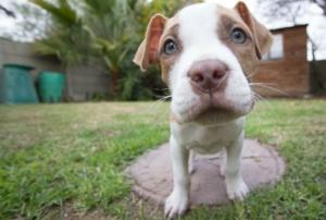 puppy-140306_1280