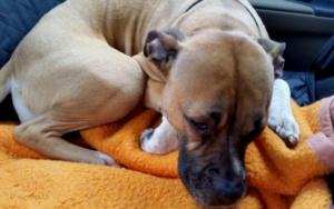 Tumor Op Beim Hund Unser Op Guide Hundhoch3